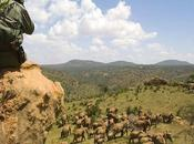 Armed Herders Invade Kenya's Most Important Wildlife Conservancy