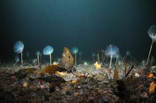 Marine Protected Areas helping to limit climate change