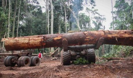Armed with smartphones, Cameroon forest defenders take on illegal loggers