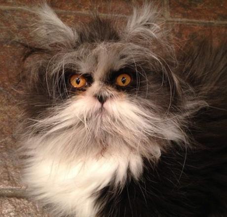 Cat Looks Like a Muppet