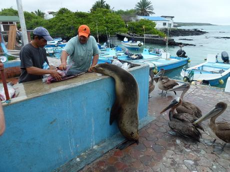 fish market puerto ayora galapagos