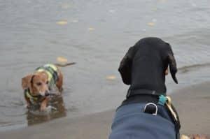 5 Best Off-Leash Dog Parks in Portland