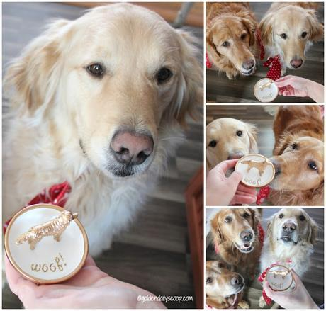 golden retriever dog ring holder project for valentine's day