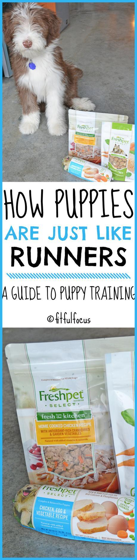 How Puppies Are Just Like Runners: A Guide To Puppy Training