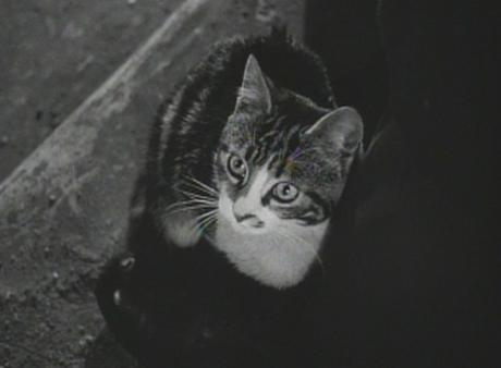 Feline Noir: Cats and Cinema's Mean Streets