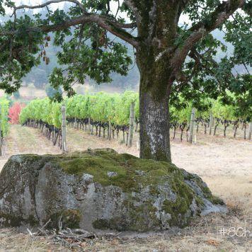 redThread™ Taste Maker Exclusive   Amanda Barnes – #80 Harvests