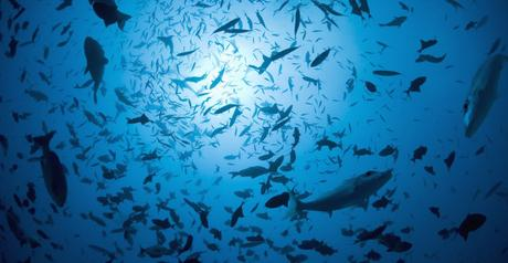 Marine hotspots under dual threat from climate change and fishing