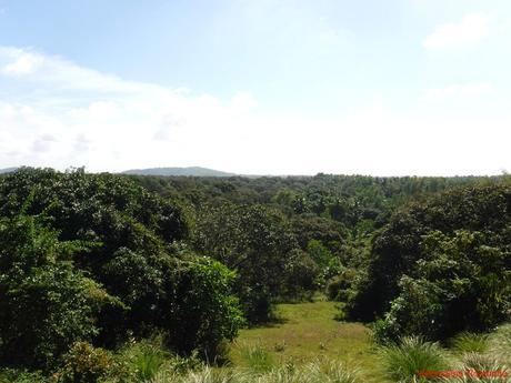 Guimaras Mango Plantations