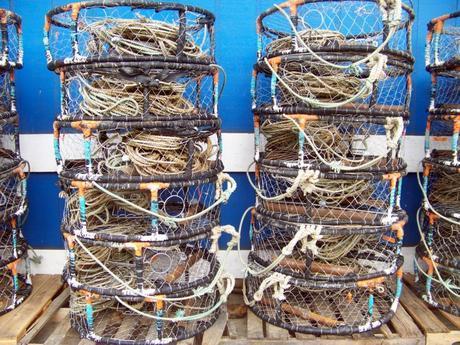 Dungeness Crabbing on Free Public Docks