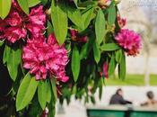 Blooms Rotunda Boavista, Porto