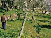 Pastoral Portugal