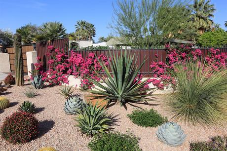No Watering The Garden With These 7 Drought Tolerant Plants