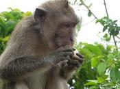 ULUWATU TEMPLE, Bali, Indonesia: Watch Monkeys! Guest Post Scheaffer