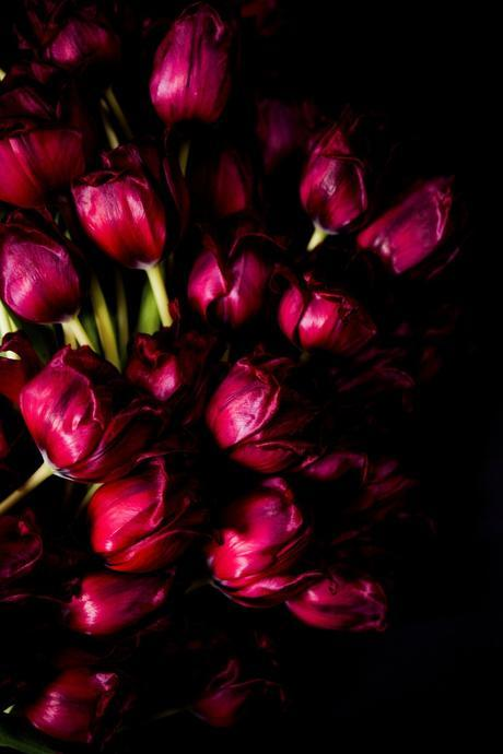 Extraordinary Red Tulips