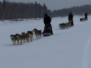 The 2017 Iditarod Begins Tomorrow