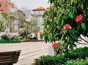Spring-loaded Praça Carlos Alberto, Porto