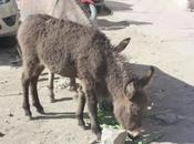 DAILY PHOTO: Ladakhi Donkeys
