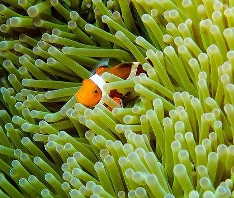 Why Diving in Okinawa, Japan Should Be On Your Bucket List