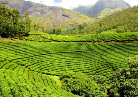 India Tea Production