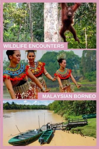 Wildlife Encounters in Malaysian Borneo