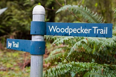 Forest Park: Portland's Free Urban Nature Sanctuary