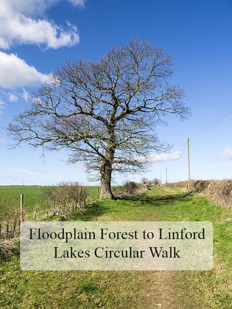 Floodplain Forest to Linford Lakes Circular Walk