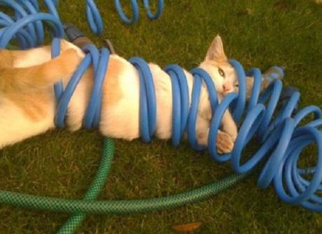 Top 10 Tangled Up Cats Who Need a Helping Hand