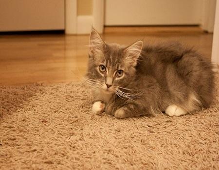 senior cat food for sensitive stomachs