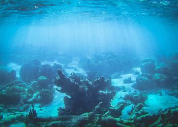A Global Plan to Save Corals from Extinction