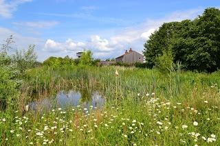 Evidence sought to make wetlands the number one solution