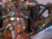 Sydney Seafood Store Convicted Animal Cruelty Inhumane Treatment Lobsters
