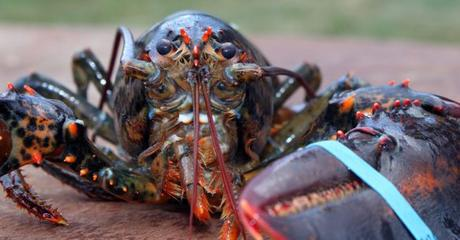 Sydney Seafood Store Convicted of Animal Cruelty for Inhumane Treatment of Lobsters