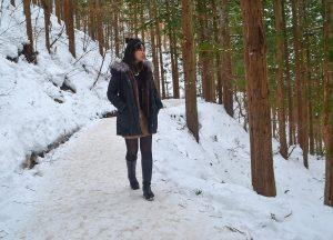 Snow Forests, JR Japan Rail Pass Travel in Winter February Snow