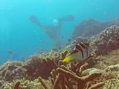 Dive Against Debris: Tackling Marine Debris Head