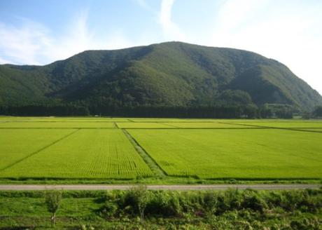 Japan Rice Production