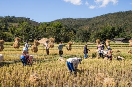 Myanmar Rice Production