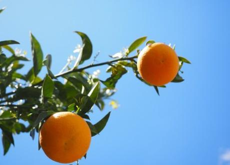 China Orange Production