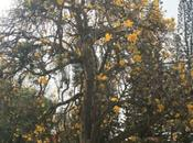 DAILY PHOTO: Yellow, Cubbon Park