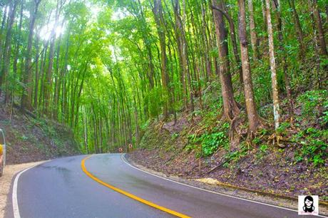 Top 10 Tourist Spots to Visit in Bohol, Philippines