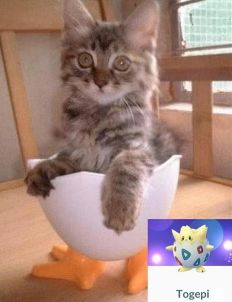 Cat Looks Like a Togepi