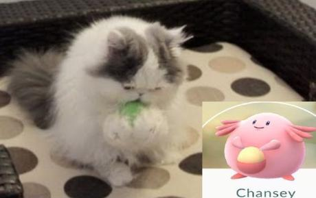 Cat Looks Like a Chansey