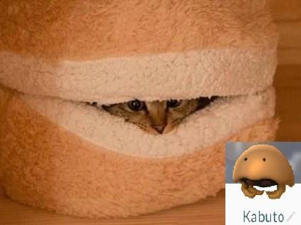 Cat Looks Like a Kabuto