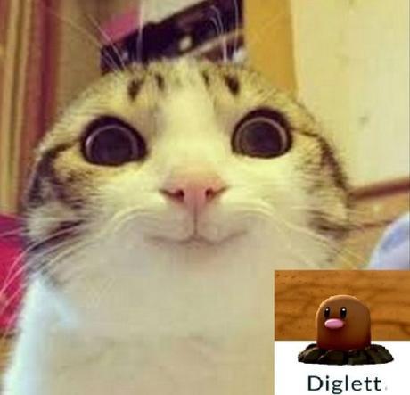 Cat Looks Like a Diglett
