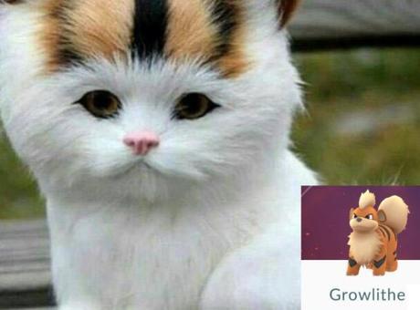 Cat Looks Like a Growlithe