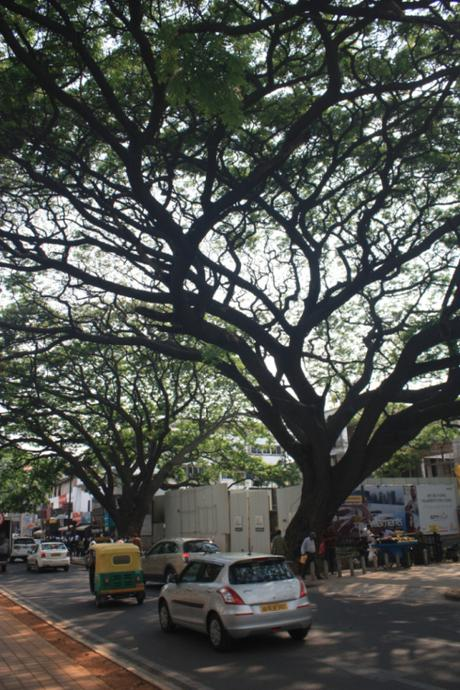 DAILY PHOTO: Trees of St. Mark's Road