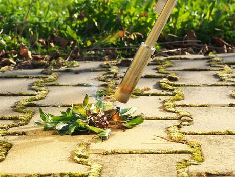 How to Get Rid of Weeds in Your Garden