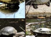 Turtle Update