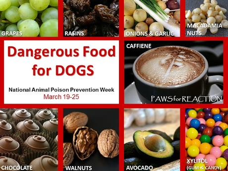 #Dangerous #Foods for #Dogs #NationalAnimalPoisonPreventionWeek #March 19-25