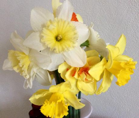You Can Never Have Too Many Daffodils