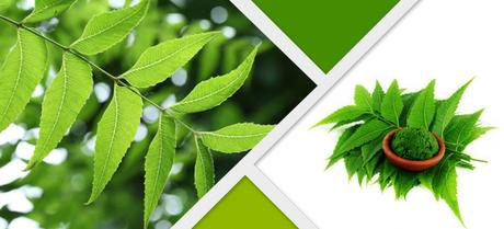 Top 10 Health Benefits of Neem (Indian Lilac)-Neem Capsules by Planet Ayurveda